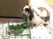 Joy LOVES kale!
