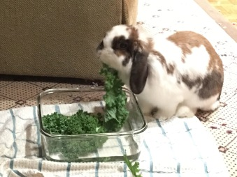 Joy LOVES kale!